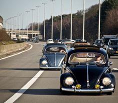 volkswagen caravan