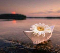 """☆*´¨`☽   ¸.★*´☽   ¸.★*´☽ (  ☆✫¸¸.•*•❥Não deixe de conjugar dois verbos que deveriam ser indissociáveis da vida: SONHAR e RECOMEÇAR. Sonhe até que aconteça. E recomece, sempre que for preciso.""""☆✫¸¸.•*•❥ ❥Leila Ferreira❥ Little Flowers, Beautiful Flowers, Beautiful Pictures, Flower Backgrounds, Wallpaper Backgrounds, Daisy, Miniature Photography, Cute Illustration, Amazing Nature"""