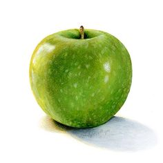 Granny Smith Apple  8x10, mixed media on paper . . . #apple #art #art_spotlight #artoftheday #artcollective #artfido #artstagram #artistsoninstagram #botanical #illustration #kendyllhillegas #food #realism #nawden #spotlightonartists #watercolor #prismacolor #mixedmedia