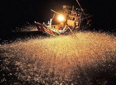 Chinese fishermen fish with fire to attract more fish