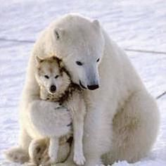 kim lacost @884daa0155924d9 Fighting 4 ALL ANIMALS GLOBALLY I GIVE A VOICE TO THE VOICELESS!   Pennsylvania