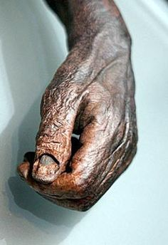 Oldcroghan Man - remarkably preserved hand - the bogs kept them well - By the Bog of Cats - Ghost Fancier Bog Body, Ancient History, Ancient Egypt, Europe Day, Egyptian Mummies, Early Middle Ages, Aliens And Ufos, Iron Age, Interesting History