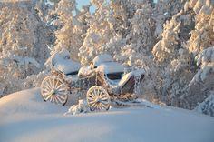 left out in the snow.left out in the snow…. I Love Snow, I Love Winter, Deep Winter, Winter Snow, Winter Time, Winter Christmas, Photo D Art, Winter Magic, Winter Scenery