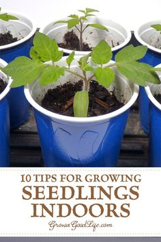 10 Steps to Starting Seedlings Indoors: Growing your own transplants from seed offers more flexibly and control over your vegetable garden. You can choose your favorite varieties, grow the number of plants you need, and work within the planting dates that suit your growing area. Organic Vegetables, Growing Vegetables, Hydroponic Gardening, Container Gardening, Growing Seedlings, Growing Plants From Seeds, Vegetable Garden Planner, Vegetable Gardening, Starting Seeds Indoors