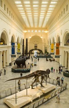 Field Museum in Chicago, Great Hall - Chicago museum photographs