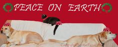 Dog and Cat Art Christmas Card Labrador and Cat by overthefenceart