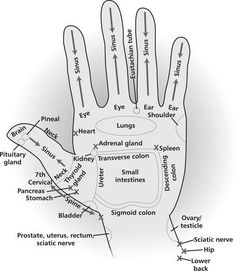 Energy areas of your hands that can be used for acupressure, energy healing, as well as direct hand massage to get the energy flow patterns for these areas of the body in a high vibrational format. Try drawing the Reiki Power Symbol over the area before y Young Living Oils, Young Living Essential Oils, Ayurveda, Hand Reflexology, Reflexology Points, Shiatsu, Hand Massage, Lymph Massage, Massage Table