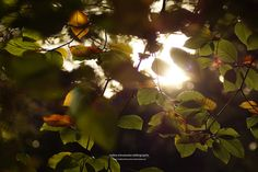 autumn leaves / lichtspiele III by nadine schumacher