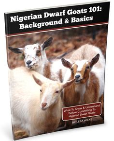 Nigerian Dwarf Goats 101: What you need to know before making the commitment. Because having goats should make you and the goats happy.
