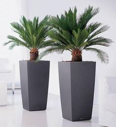 6 Healthy Cool Tips: Artificial Plants Office Plastic artificial flowers peonies.Artificial Plants Decoration Living Rooms artificial grass home.Artificial Plants Indoor Home. Potted Plants, Garden Plants, Indoor Plants, Outdoor Planters, Planter Pots, Tall Planters, Sago Palm Tree, Container Plants