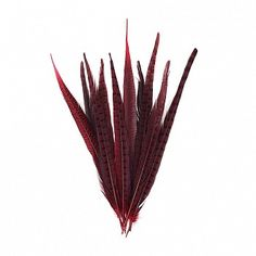 """Pheasant Tails Assorted Dyed - Red  Product SKU: B572_10--R Size: 14-18"""" (10 piece pkg) Shop Feathers: www.featherplace.com Pheasant Feathers, Size 14, Shop, Red, Store"""