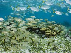 Can Genetics Improve Fisheries Management?