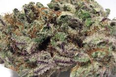 Blackberry Kush This isn't our photo, but you get the point. It's a real beauty to behold. But the beauty is in the eye of the beholder. So, come and behold!