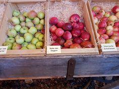 Apple, Fruit, Food, Harvest Season, Sheep, Meal, The Fruit, Essen, Hoods
