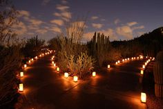 Las Noches De Las Luminarias. Botanical GardensDesert ...