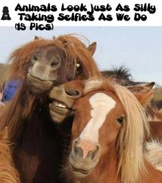 Animals Look Just As Silly Taking Selfies As We Do ! (15 Pics)