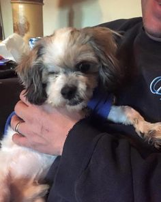 Meet Baby, Anarchy Animal Rescue, Petfinder adoptable Shih Tzu Dog - Staten Island, NY - Baby is a handsome 4 yr old/8lb Shih Tzu who lost his vision and one of his eyes when he was...