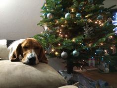 Loving the holidays