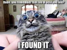 These funny cats and silly cats will make you laugh. Check out these funny cat videos in this funny cats compilation Mashup Zone is a channel with funny Funny Cat Memes, Funny Cats, Funny Animals, Cute Animals, Funniest Animals, Funniest Memes, Funny Quotes, That's Hilarious, Funny Humor