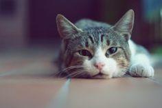 Cat-Wallpaper-10