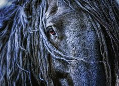 Black Horse: North Road (by Isabelle Ann)