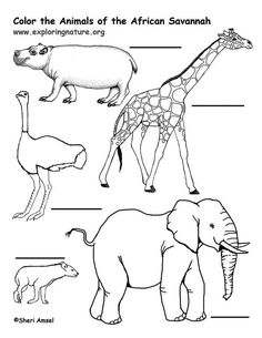 Savanna (African) Animals Coloring Page    Exploring Nature Educational  Resource
