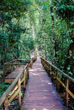 If you are visiting the Pacific side of Costa Rica, don't miss a trip to Manuel Antonio National Park filled with wildlife and stunning beaches!