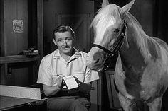 Mister Ed: Season 4, Episode 2 Wilbur Post, Honorary Horse (6 Oct. 1963)