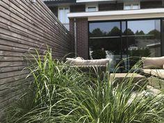 Relax, Diy Wood, Modern, Plants, Outdoor, Lush, Cilantro, Outdoors, Trendy Tree