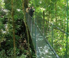 ESTADOS UNIDOS Y COSTA RICA REPRESENTAN AL CONTINENTE AMERICANO:   Costa Rica figura en la lista de los 25 bosques mágicos del mundo, según comunidad de viajeros.