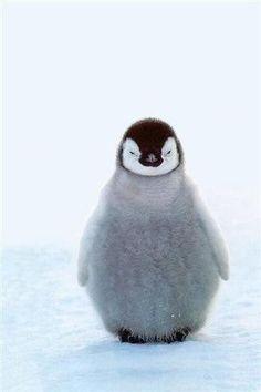 Ahhh so friggin cute!!!