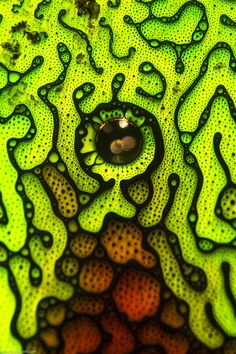 Ferrofluid a remarkable photomicrograph by Justin Zoll that made The Top 100 best pictures of the inaugural Close-up Photographer of the Year. Micro Photography, Photography Awards, Patterns In Nature, Textures Patterns, Microscopic Photography, Lighting Techniques, Motif Floral, Science Art, Organic Shapes