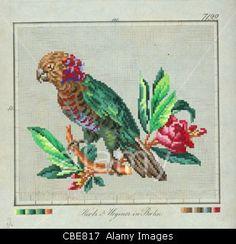 Pattern for Berlin wool work of a Hawk headed Parrot  Pattern for Berlin wool work of a Hawk headed Parrot published by Hertz & Wegener