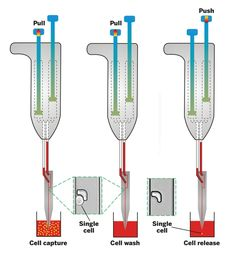 New Pipette Picks Up Single Cells