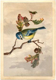 Free Vintage Bird Clip Art - Marvelous! - The Graphics Fairy