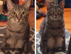 When you adopt a pet, you never know what kinds of behavioral quirks you'll discover. You might even end up with a cat who sits like a gargoyle…which isexactly what happened to one couple who rescued a cat named Wilbur and posted a photo of his odd habit on Reddit. The Reddit original poster (Wolfpackago) …