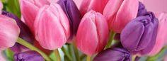 Tulipani rosa e viola
