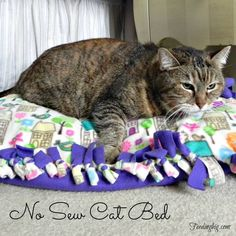No sew cat bed - make one in minutes. #IAMSCats #Ad