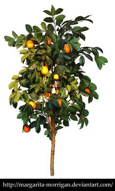 Orange tree by margarita-morrigan