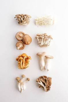 After buying every kind of fungi to write my guide to Japanese mushrooms, my first creation was this easy keto mushroom pasta with shirataki noodles. Mushroom Pasta, Mushroom Fungi, Mushroom Recipes, Mushroom Guide, Keto Mushrooms, Edible Mushrooms, Stuffed Mushrooms, Wild Mushrooms, Shiitake