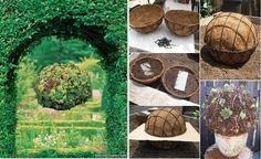www.goodshomedesign.com how-to-make-a-succulent-ball