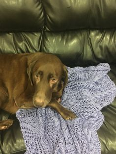 Picture 3 of 7 Another blanket donated 2 my friend Barbara today Tested by furry blankie stealer😂 Enjoy💜💜💜 by My Friend, Friends, Knitting Projects, Blanket, Dogs, Pictures, Animals, Animais, Animales