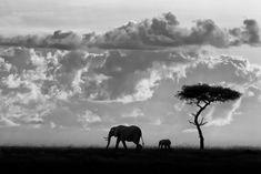 Silhouettes of the Mara by Mario Moreno