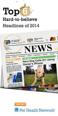 #topheadlines #news #pets #amazing #pethealthnetwork