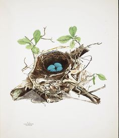 ~ The Feathered Nest ~: Antique children photograph
