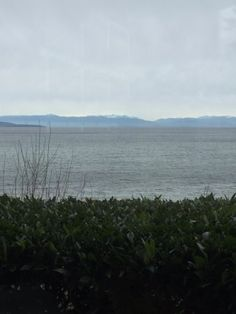 View from our window table, Bayside Bistro and Lounge, 240 Dogwood St | Parksville, BC