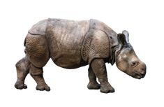 10,000+ Free Isolated & Nature Photos - Pixabay Free Iphone Wallpaper, Free Hd Wallpapers, Free Pictures, Free Images, Wild Rhino, Interactive Art, Rhinoceros, Beautiful Girl Image, Girls Image