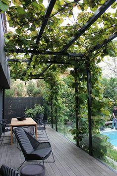 modele de terrasse couverte avec des plantes rampantes tout autour et des meubles ambiance minimaliste