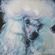 Poodle white standard Painting  - Poodle white standard Fine Art Print