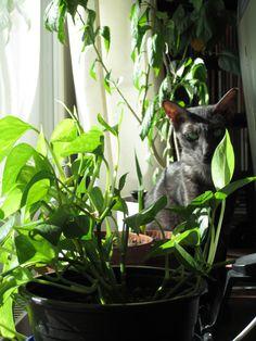 Viidakko ikkunalaudalla.